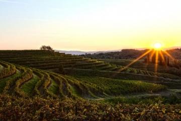 Bastianich Winery