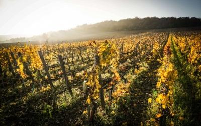 Borgogna/ Burgundy